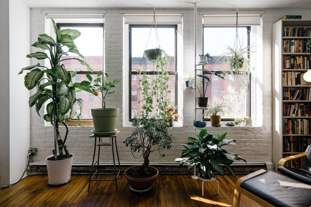 Így tartsd életben a szobanövényeidet