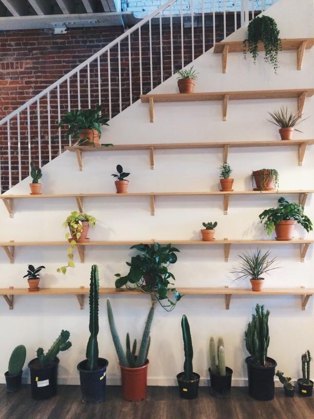 A minimál stílus és a szobanövény kapcsolata.