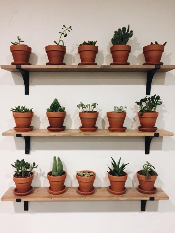 virágzó növények