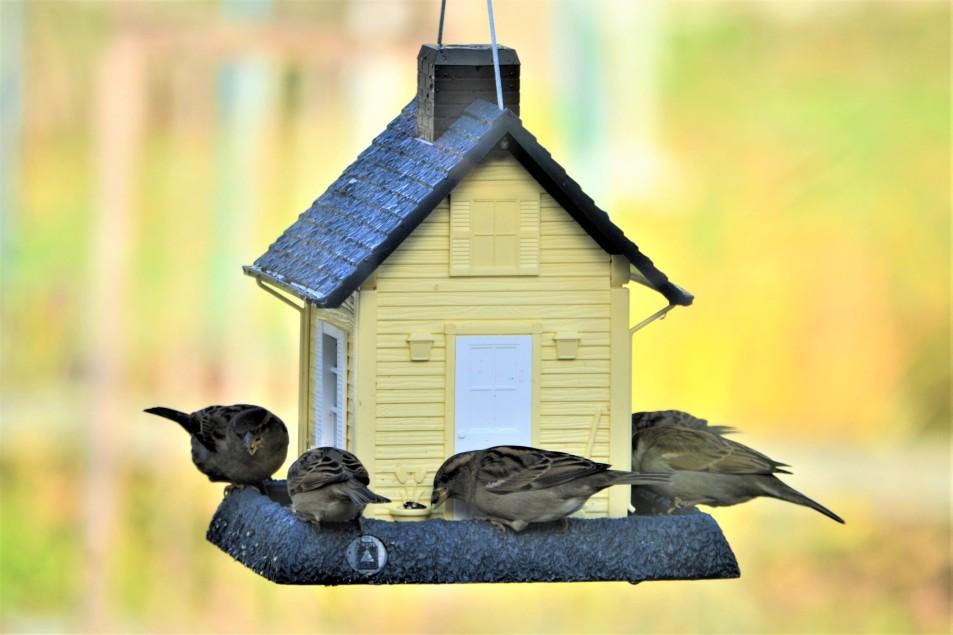 madáretető készítés