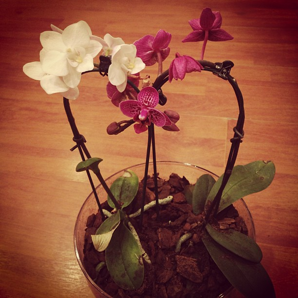 Orchidea ültetés